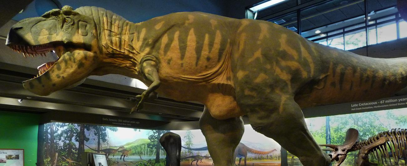 exhibits_dinosaurs